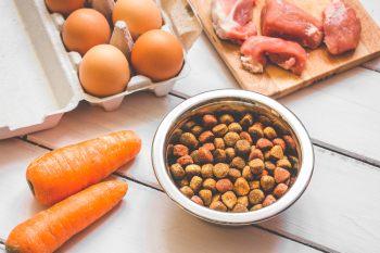Смешанное питание кошек: заедаем сухой корм котлетой и картошкой фри!