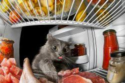 Заболевания кожи у кошек, вызванные неправильным кормлением
