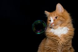 Пузырчатка кошек: диагностика, лечение, профилактика