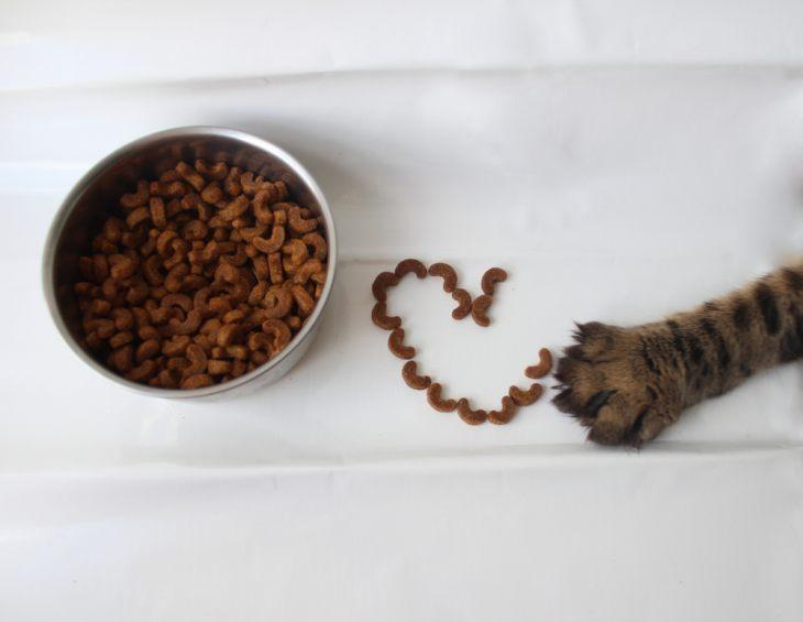 Чем кормить кошку — плюсы и минусы разных типов кормления. Сухой корм, натуральное питание, влажный корм
