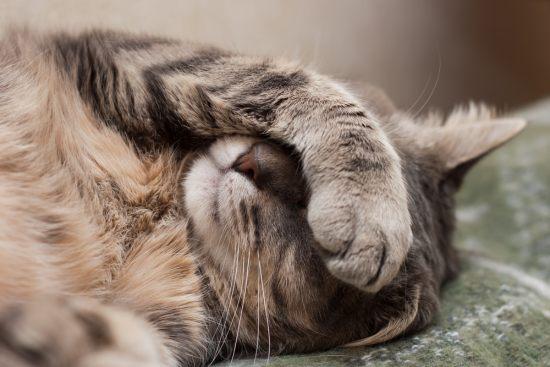 10 самых распространенных мифов о стерилизации кошек