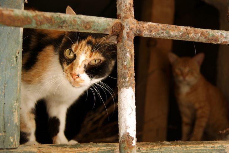 Вирусный лейкоз кошек: симптомы, диагностика, лечение и прогноз
