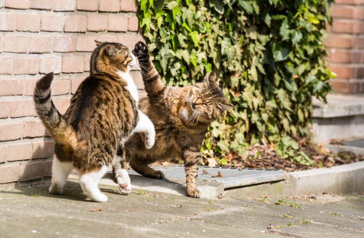 Кастрация кота: плюсы и минусы. В каком возрасте планировать операцию?