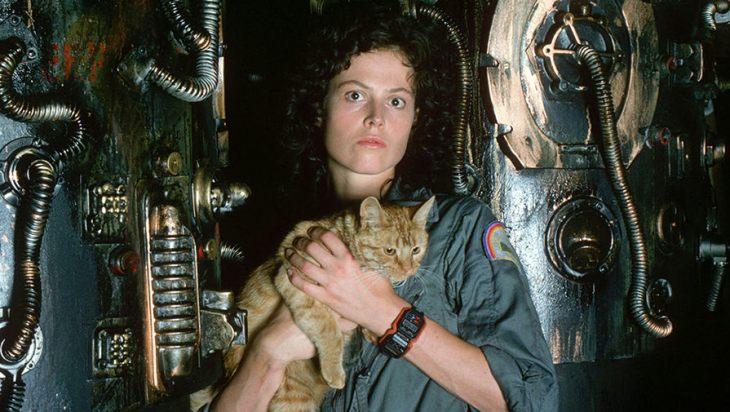 Известные коты из фильмов — фото и видео котов-актеров