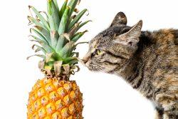 Обзор консервированного корма 1'st Choice — ешь ананасы и тунца жуй!