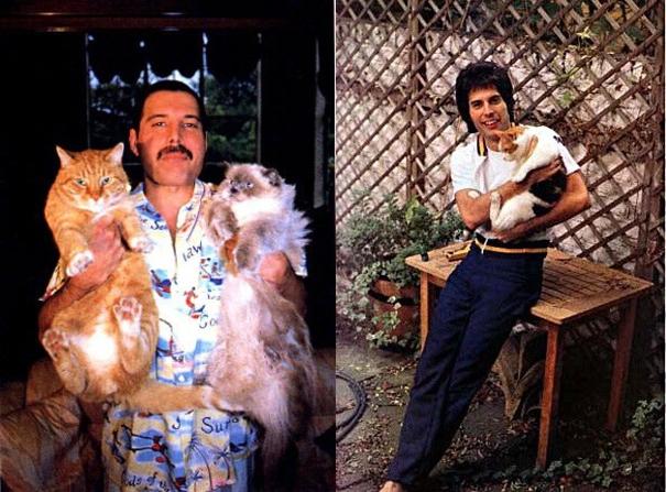 Кошки знаменитостей — известные музыканты и их кошки