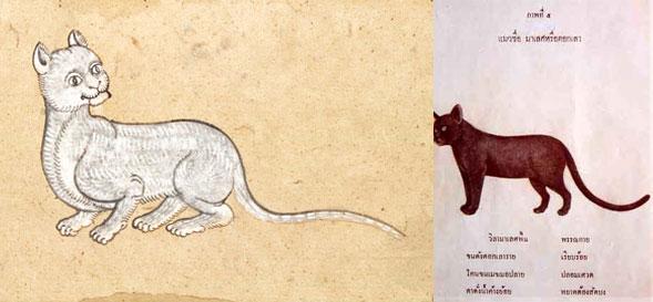 Кошки в Таиланде — 5 аборигенных пород из древнего Сиама