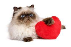 Гипертрофическая кардиомиопатия: причины, диагностика, лечение