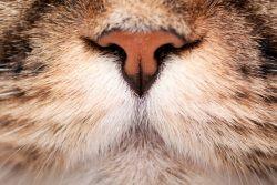 Полип в носу у кошки: причины появления и лечение назофарингеальных полипов