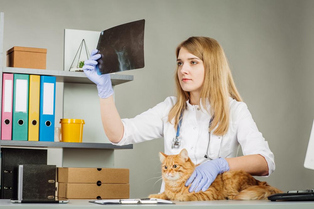 Симптомы перелома позвоночника у кошки