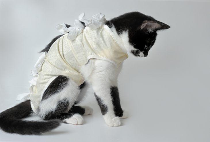Фиброаденоматозная гиперплазия молочных желез у кошек: причины, лечение