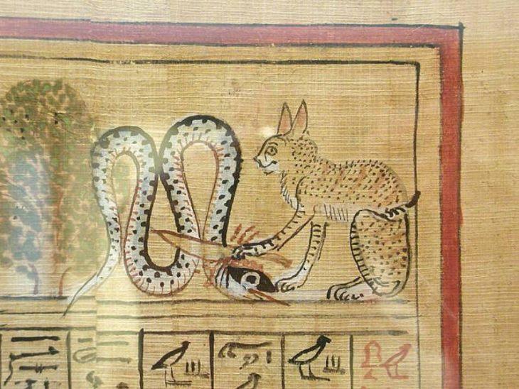 Египетская мау — загадочная любимица древних фараонов