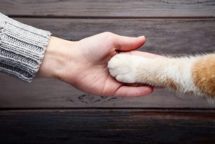 Способны ли кошки на месть и обиду?