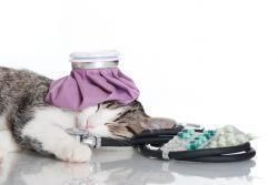 13 признаков, что ваша кошка больна