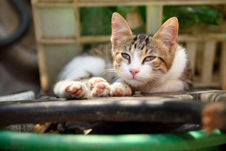 Третье веко у кошки - почему оно появляется?