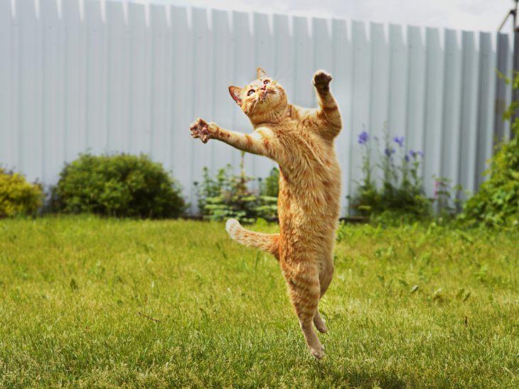 Анатомия кошек: общие сведения