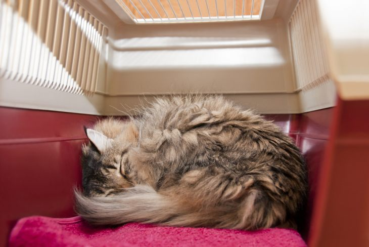Особенности перевозки кошки в поезде и самолете – как сделать путешествие комфортным?