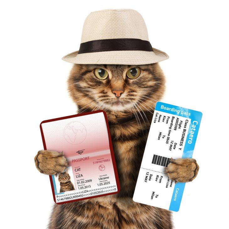 В путешествие с кошкой – какие документы нужны?