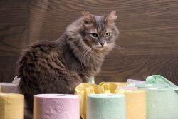 Дисбактериоз у кошек – миф или реальность?