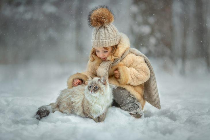 Сибирская кошка — достояние России
