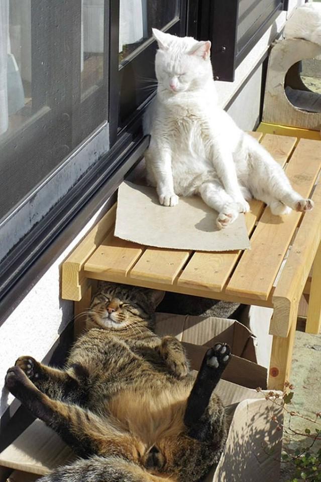 КотоДайджест на май - все самое интересное. Мир, Труд, Кот!