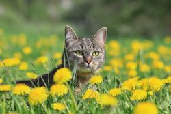 КотоДайджест на май — все самое интересное. Мир, Труд, Кот!